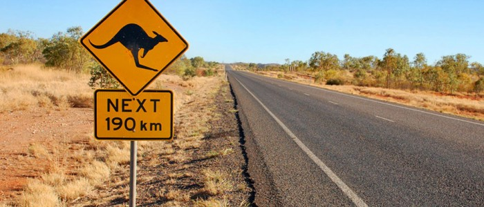 Close encounters of the Roo kind